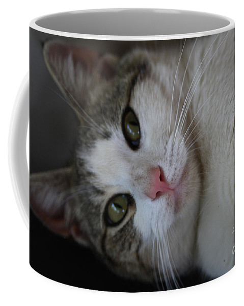 Cats Coffee Mug featuring the photograph Soxx by Kim Henderson