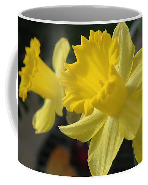 Daffodil Coffee Mug featuring the photograph Spring Yellow by Jerry McElroy
