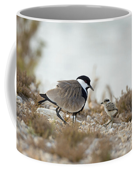 Chick Coffee Mug featuring the photograph Spur-winged Lapwing Vanellus Spinosus by Alon Meir