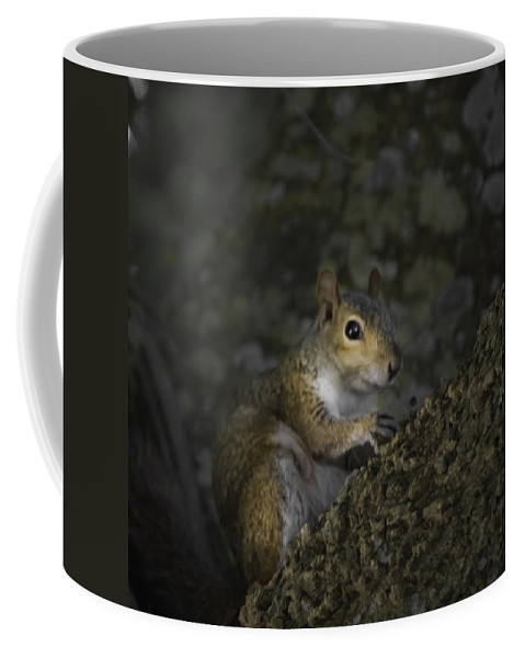 Squirrel Coffee Mug featuring the photograph Squirrel by Judy Hall-Folde