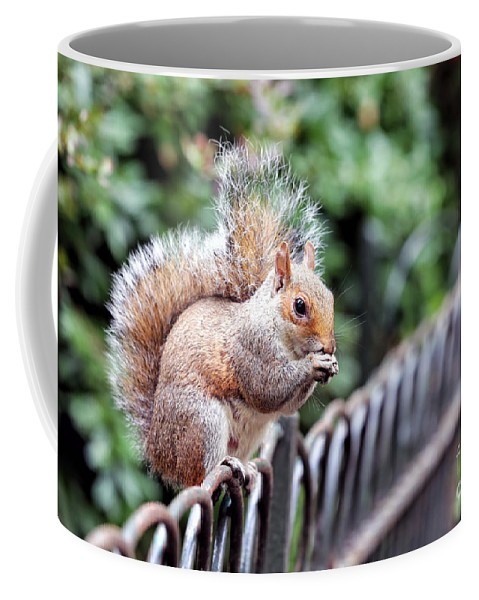 Squirrel Coffee Mug featuring the photograph Squirrel by Paul Fell