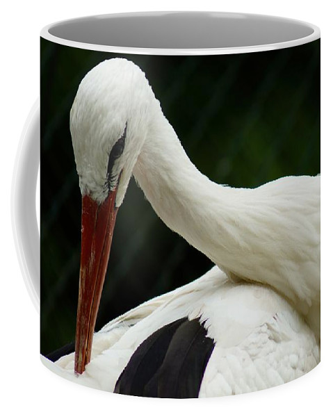Bird.wings Coffee Mug featuring the photograph Stork by FL collection