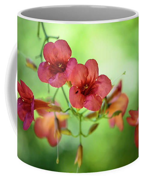 Flower Coffee Mug featuring the photograph Summer Flowers by Nailia Schwarz