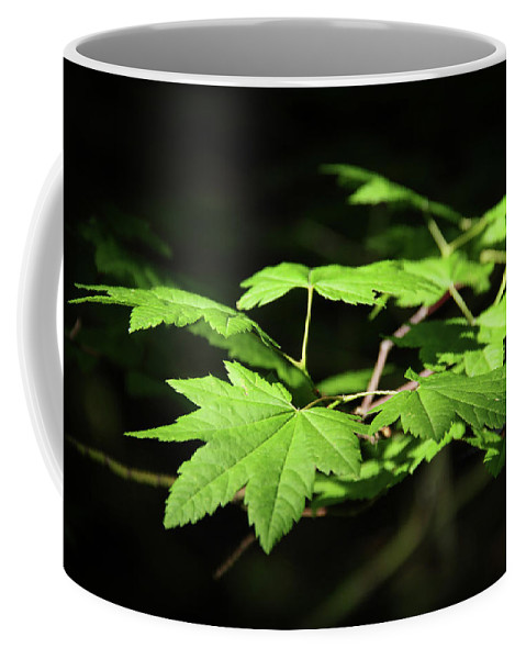 Tree Coffee Mug featuring the photograph Sunny Summer Maple by Marie Leslie