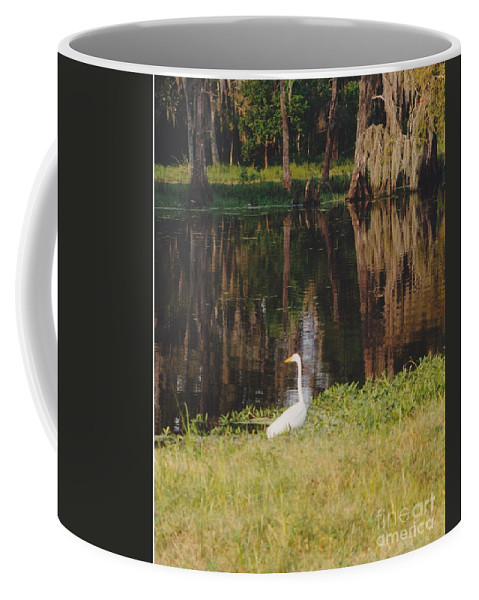 Landscape Coffee Mug featuring the photograph Swamp Bird by Michelle Powell