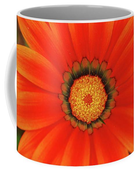 Daisy Coffee Mug featuring the photograph The Beauty Of Orange by Lori Tambakis