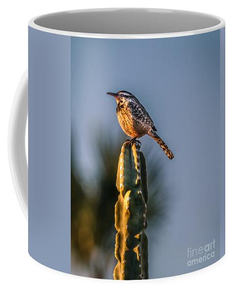 Bird Coffee Mug featuring the photograph The Cactus Wren by Robert Bales