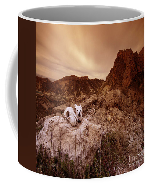 Skulls Coffee Mug featuring the photograph The Skulls by Angel Ciesniarska