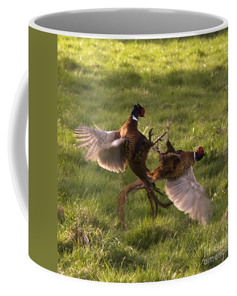 Pheasant Coffee Mug featuring the photograph The Sparring by Angel Tarantella
