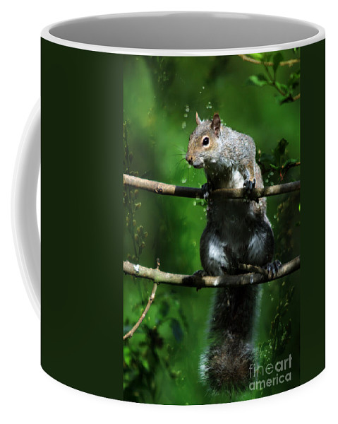 Squirrel Coffee Mug featuring the photograph The Squirrel From Fairyland by Angel Ciesniarska