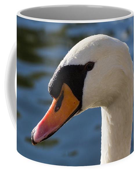 Swan Coffee Mug featuring the photograph The Watchful Swan by David Pyatt