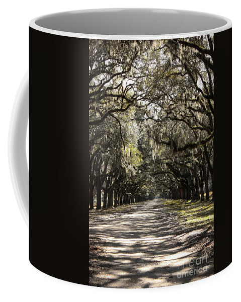 Live Oaks Coffee Mug featuring the photograph This Way by Carol Groenen