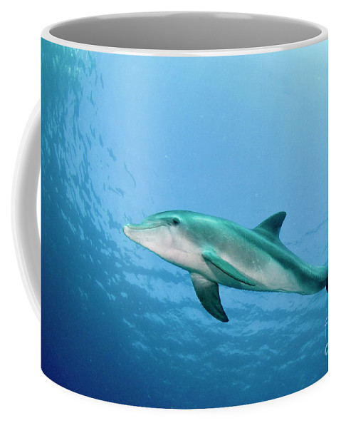 Dolphin Coffee Mug featuring the photograph three year old Dolphin by Hagai Nativ