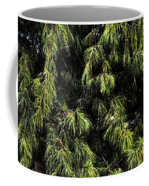 Tree Coffee Mug featuring the photograph Tree 8 by Kristalin Davis