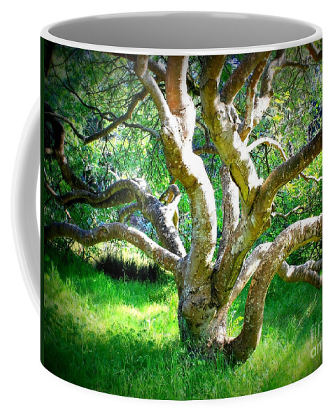 Photography Coffee Mug featuring the photograph Tree In Golden Gate Park by Carol Groenen