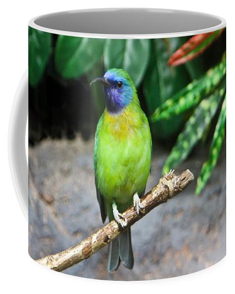 Tropical Coffee Mug featuring the photograph Tropical Bird by Douglas Barnett