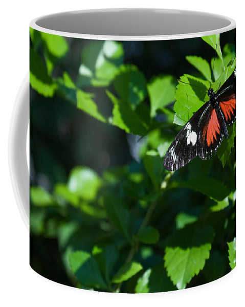 Tropical Coffee Mug featuring the photograph Tropical Butterfly by Douglas Barnett