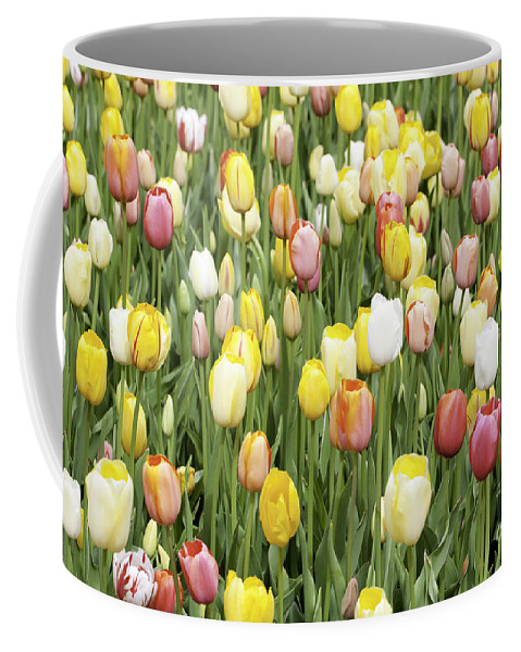 Garden Coffee Mug featuring the photograph Tulip Garden by Anthony Totah