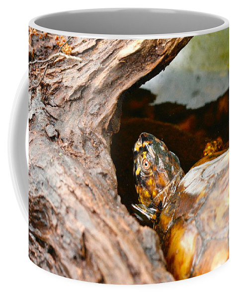 Coffee Mug featuring the photograph Turtle by Shirley Sykes Bracken