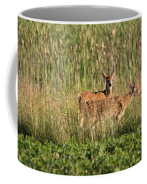 Whitetail Deer Coffee Mug featuring the photograph Two Of Them by Linda Kerkau