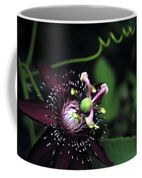 Nature Coffee Mug featuring the photograph Up Close 6 by Adam Vance