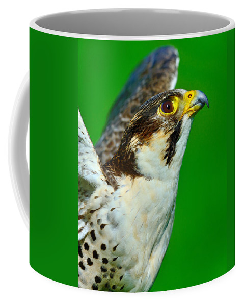 Peregrine Falcon Coffee Mug featuring the photograph Up by Tony Beck