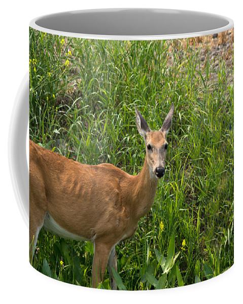 Whitetail Deer Coffee Mug featuring the photograph Watching Me by Linda Kerkau