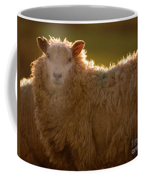 Lamb Coffee Mug featuring the photograph Welsh Lamb In Sunny Sauce by Angel Ciesniarska