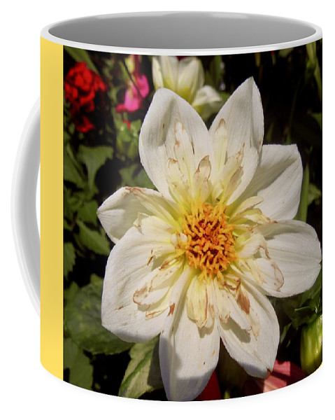 Flower Coffee Mug featuring the photograph White Flower by Stephanie Moore