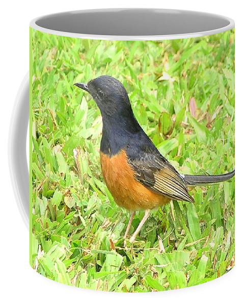 Black Coffee Mug featuring the photograph White-rumped Shama by Mary Deal