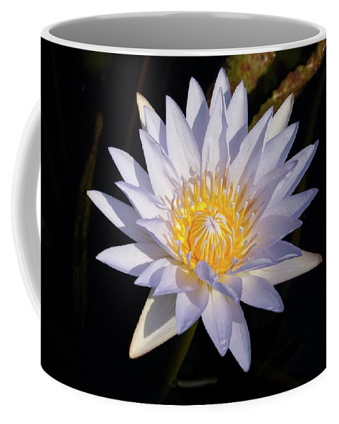 Water Lily Coffee Mug featuring the photograph White Water Lily by Steve Stuller