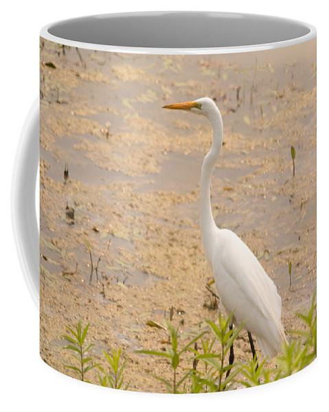 Great Egret Coffee Mug featuring the photograph Whitey by Linda Kerkau