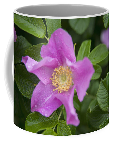 Wild Rose Coffee Mug featuring the photograph Wild Rose by Alana Ranney