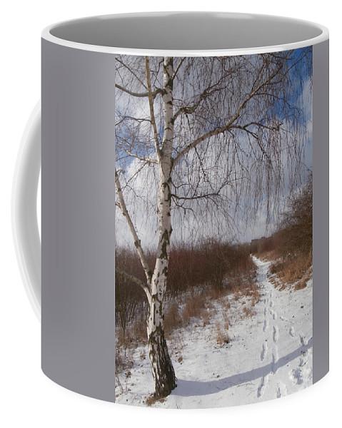 Background Coffee Mug featuring the photograph Winter Birch by Miroslav Nemecek