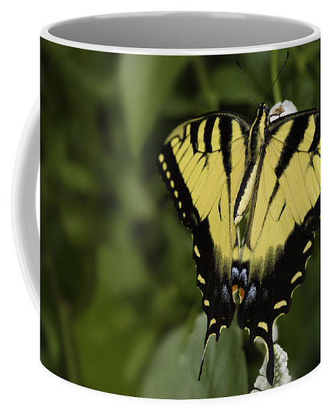 Butterfly Coffee Mug featuring the photograph Yellow Butterfly by Billy Bateman