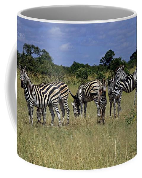 Zimbabwe Coffee Mug featuring the photograph Zebra Group by Tony Murtagh