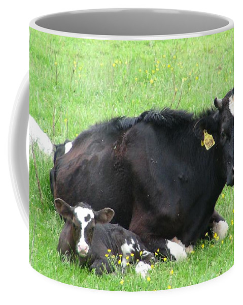 Cattle Coffee Mug featuring the photograph Cows by FL collection