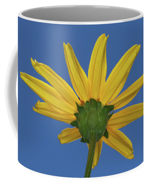 Wild Sunflower Coffee Mug featuring the photograph Wild Sunflower Stony Brook New York by Bob Savage