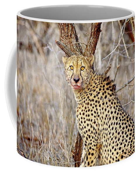 South Coffee Mug featuring the photograph 1022 Cheetah by Steve Sturgill