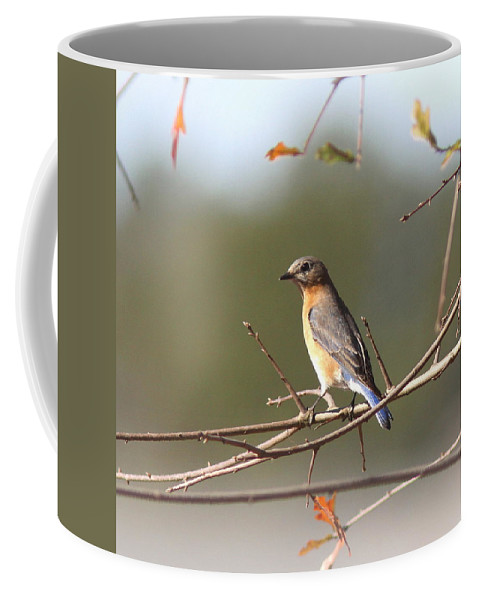 Bluebird Coffee Mug featuring the photograph 105319 - Bluebird by Travis Truelove