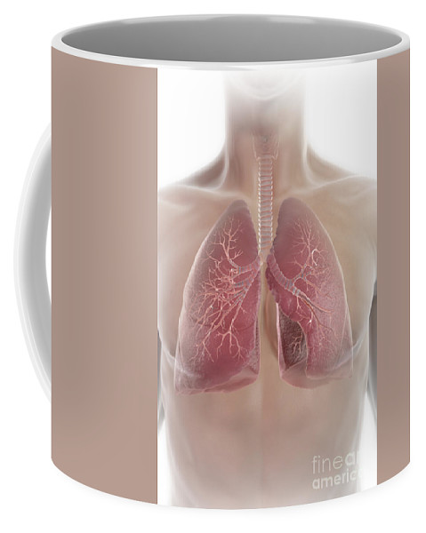 Digitally Generated Image Coffee Mug featuring the photograph Lungs by Science Picture Co