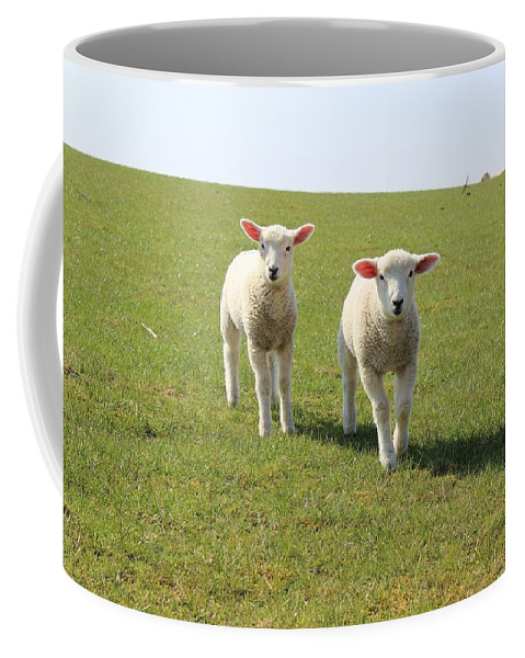 Ewe Coffee Mug featuring the photograph Sheep by FL collection
