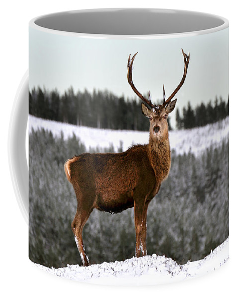 Red Deer Stag Coffee Mug featuring the photograph Red Deer Stag by Gavin Macrae
