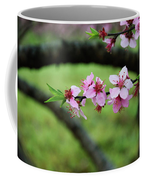 Peach Coffee Mug featuring the photograph Blossoming Peach Flowers Closeup by Carl Ning