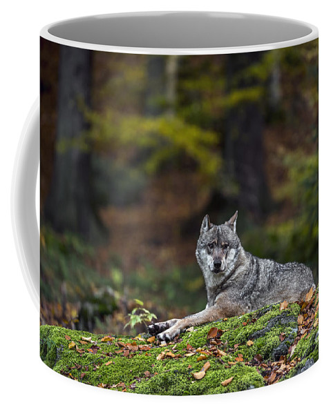 Europe Coffee Mug featuring the photograph 151105p097 by Arterra Picture Library
