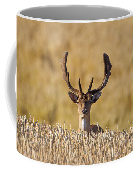 Fallow Deer Coffee Mug featuring the photograph 151105p145 by Arterra Picture Library