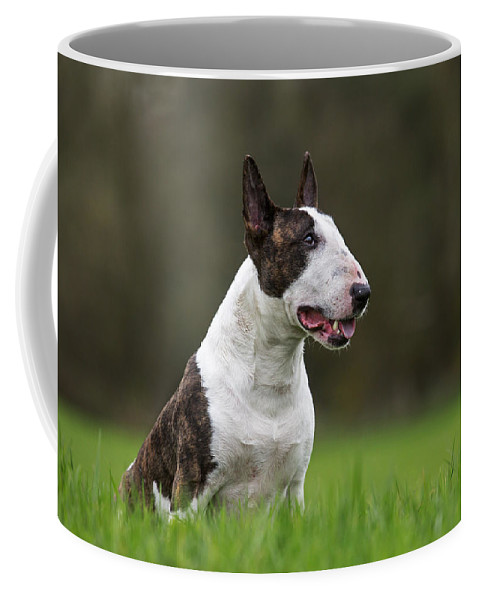 Bull Terrier Coffee Mug featuring the photograph 151105p277 by Arterra Picture Library