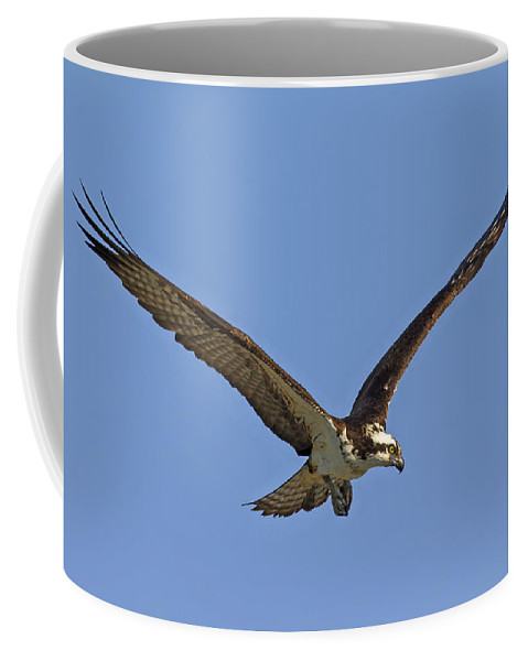 Osprey Coffee Mug featuring the photograph 151105p332 by Arterra Picture Library