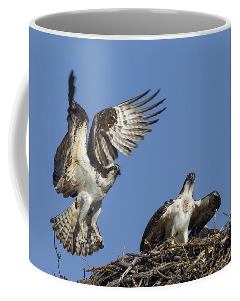 Osprey Coffee Mug featuring the photograph 151105p350 by Arterra Picture Library