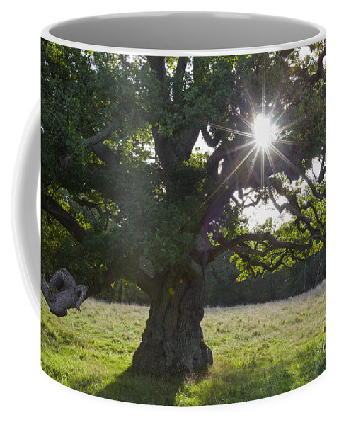 Old Coffee Mug featuring the photograph 151124p105 by Arterra Picture Library